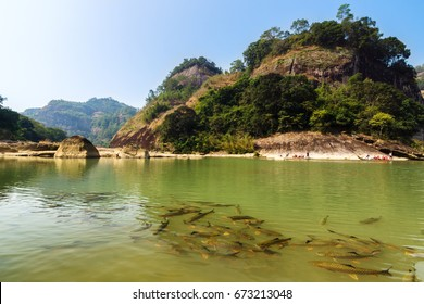 Fish in river in Wuyi Mountains park in Fujian province, China.