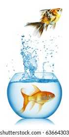 fish runs away  isolated