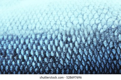 Fish scale, closeup