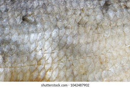 Fish scales background