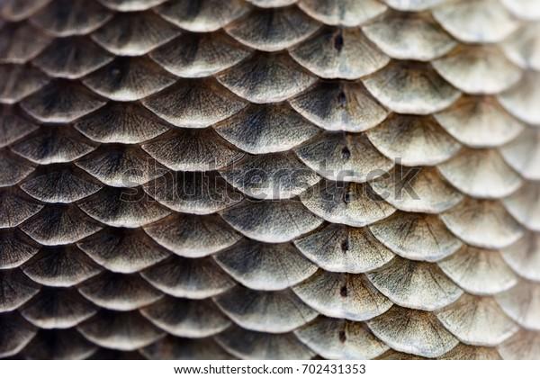 fish-scales-skin-texture-macro-600w-7024