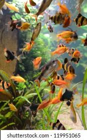 fish school in aquarium