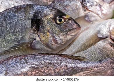 fish sea food background