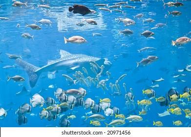 Fish and shark in large tank at Georgia Aquarium (Atlanta, Georgia)