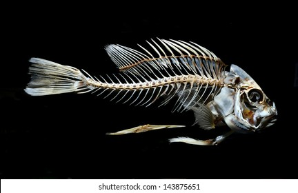 fish skeleton bone isolated on black background