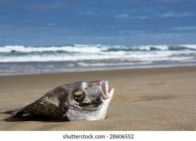 Fish skeleton on the beach
