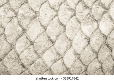 Fish skin texture close-up or image of dry scales.