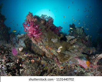 Fish, soft corals, sponges and ascidians anainst a blue sea background