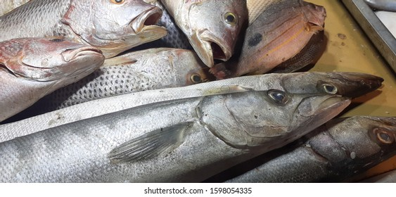 Fish sold in a fish market in keamari, Karachi, Pakistan