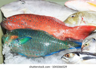 Fish is sold in the night fish market