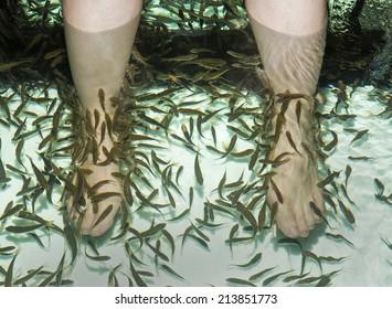 Fish spa feet pedicure skin care treatment with the fish rufa garra