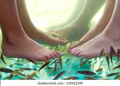Fish spa pedicure of female feet