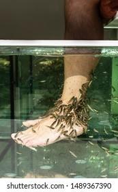 Fish spa pedicure. Rufa Garra treatment. Alternative medicine concept. Spa and wellness concept. Relax and skin care in fish spa.