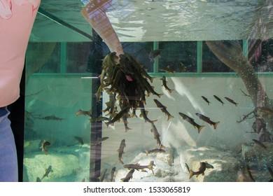Fish spa pedicure treatment. Hand and fish in blue aquarium, woman hand