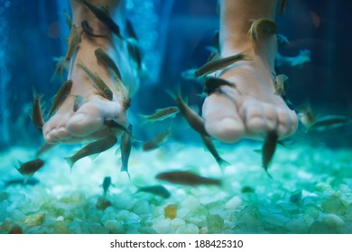Fish spa pedicure wellness skin care treatment with the fish rufa garra, also called doctor fish, nibble fish and kangal fish