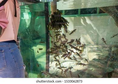 Fish spa pedicures, fish eat dead skin