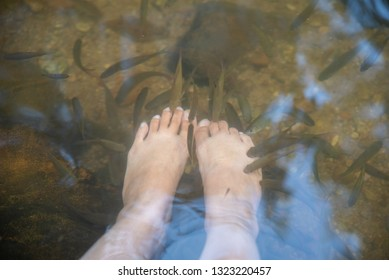 Fish spa therapy with female legs.