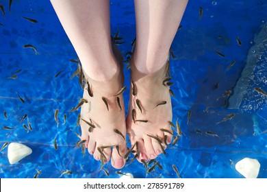 Fish spa (with Garra rufa) in a beautiful blue water