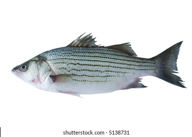 Fish (striped sea bass isolated on white)