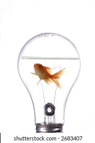 A fish swimming around in a light bulb. White background.