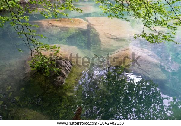 Fish swimming in the Blausee or Blue Lake in the Bernese Alps, Kandersteg, Bern canton, Jungfrau region, Switzerland