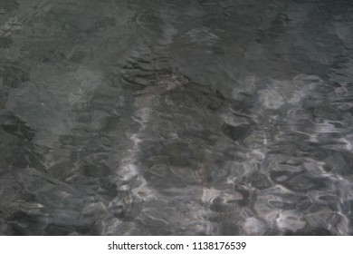 Fish swimming in clear sea water at night.