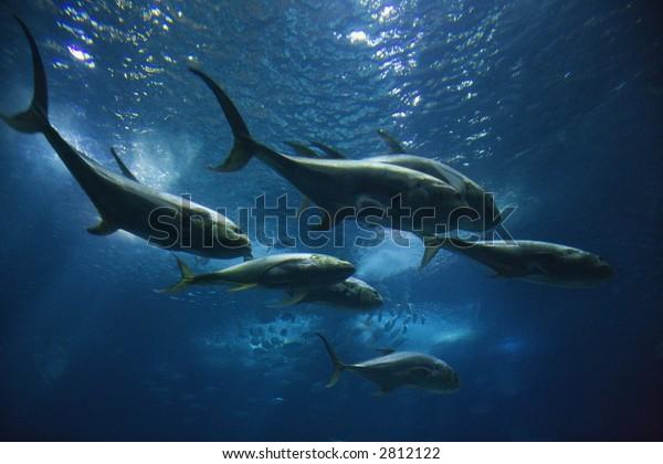 Fish Swimming in Lisbon Aquarium