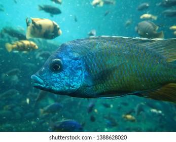 Fish swims underwater in ocean