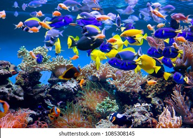 Fish tank. Aquarium with fish will delight you with its unforgettable beauty of the underwater world.