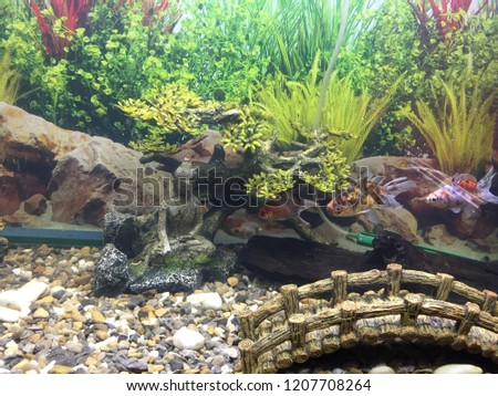fish tank setup stock photo edit now 1207708264 shutterstock