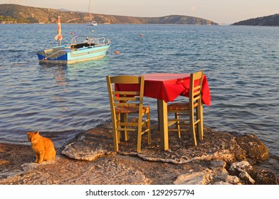Fish tavern table almost inside the sea and a cat neaby, in Greece, photographed at late afternoon