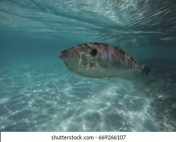 Fish in transparent waters, Arraial do Cabo, Brazil