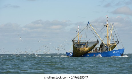 Fish trawler at work with seagulls flying behind on Waddenzee