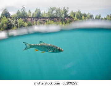 fish under surface in old quarry