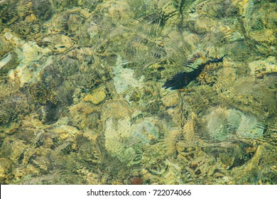 fish under water in the sea
