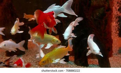 fish underwater in ocean. Fish swim in a sea of video 4k beautiful ocean