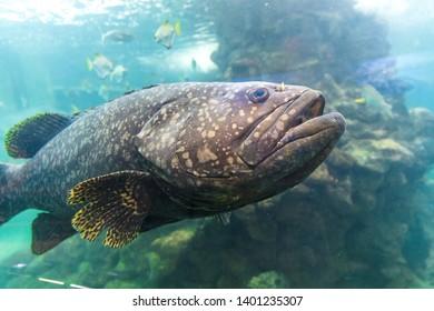 fish in water of aquarium
