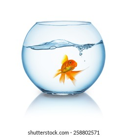 fishbowl with a breathing goldfish and wavy water surface