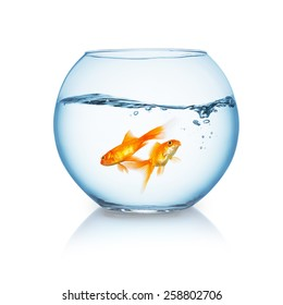 fishbowl with a couple of goldfishes