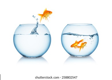 fishbowl with a jumping goldfish on white background