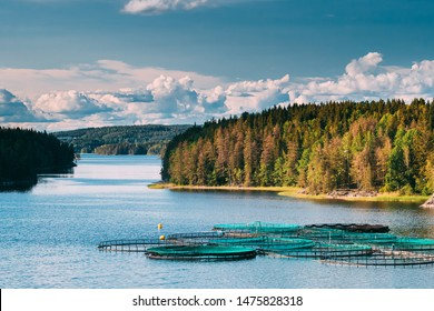Fisheries, Fish Farm In Summer Lake Or River In Beautiful Summer Sunny Day. Swedish Nature, Sweden.