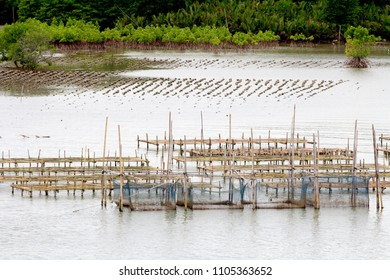 Fisheries in Thailand
