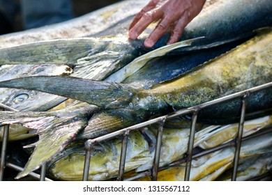 Fisherman catch of the day PHOTO IMAGESETMOTS.COM