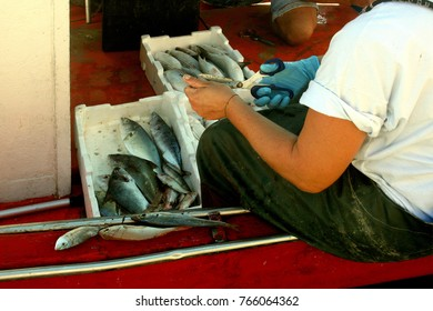 Fisherman cleans the fish aboard the fishing vessel
