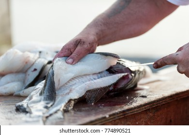 A fisherman cleans fresh Atlantic cod fish on a splitting table. There are fillets piled up in the background and the man is using a filleting knife on a codfish in the foreground.