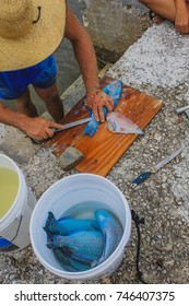 A fisherman is cutting fresh Parrot fish with a knife on wooden cutting board in a fisherman village. Cherokee Sound, Marsh Harbour, Abaco, The Bahamas.
