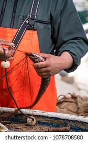 Fisherman disentangling fish caught in the net, Dubrovik, Croatia