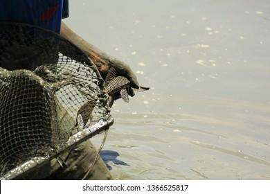 Fisherman fishing with fishing net in river