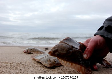 fisherman hand close-up with fish flounder, sea shore in background.Baltic flounder sea fishing