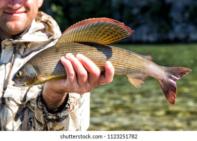 The fisherman is holding a caught fish grayling